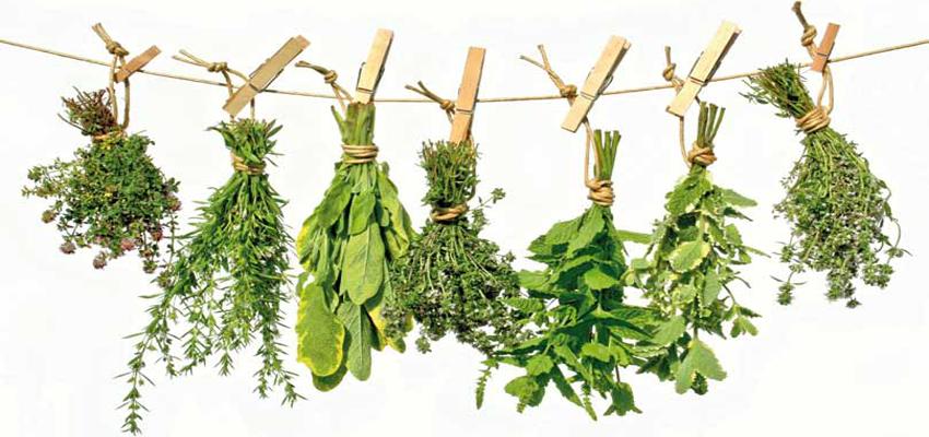 plantas medicinales para eliminar la ansiedad