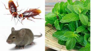 jamás aparecerán cucarachas o ratones
