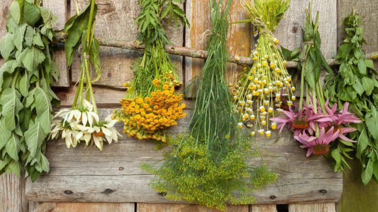 plantas medicinales para reducir la ansiedad
