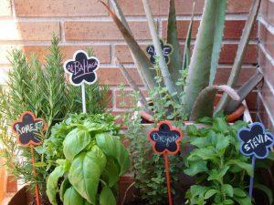 plantas medicinales que puedes tener en casa