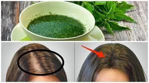 plantas para la caída y crecimiento del cabello