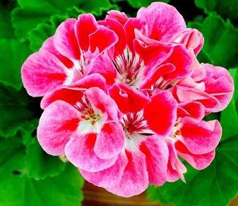 Una de las -mejores-plantas-para-jardines-verticales