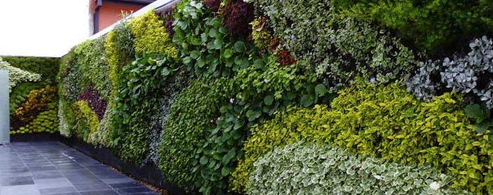 Mira las mejores plantas para jardines verticales for Jardines verticales construccion
