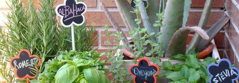 Plantas Medicinales Más Comunes