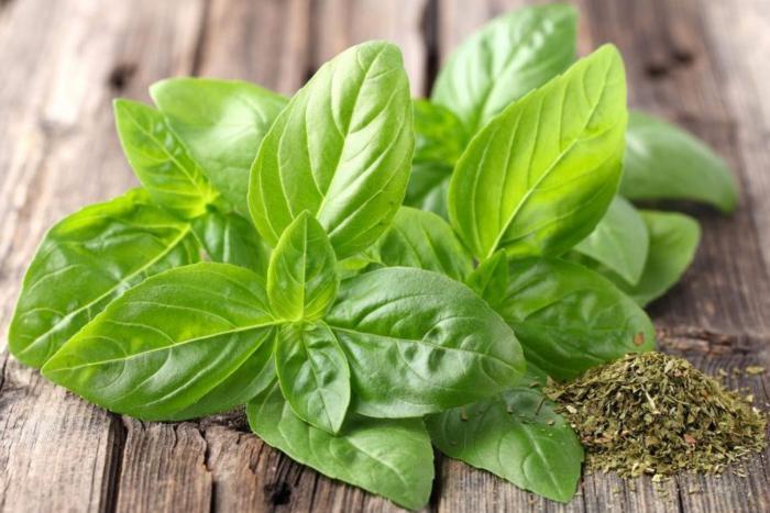 La albahaca contiene grandes propiedades -medicinales-