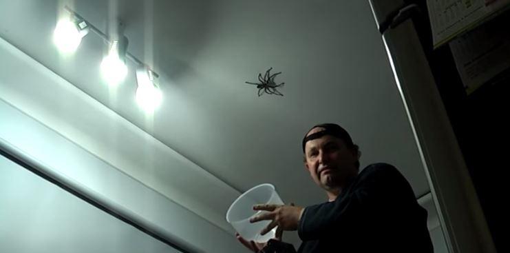 Atrapar una araña es uno de los pasos para -superar-la-aracnofobia-
