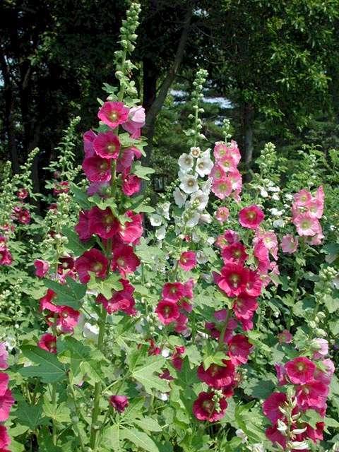 Casi tres metros de ornamento natural para el -jardín-vertical