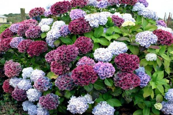 plantas peligrosas que no deberías tener