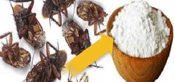 bicarbonato-y-azucar-para-matar-cucarachas