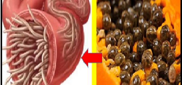 semilla-de-papaya-para-los-parasitos-intestinales