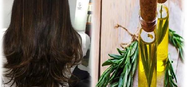recetas-con-romero-para-el-cabello