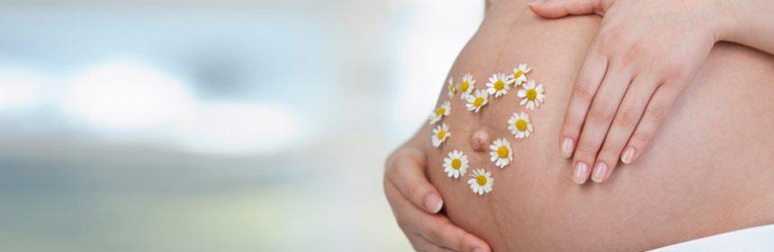 plantas medicinales para quedar embarazada