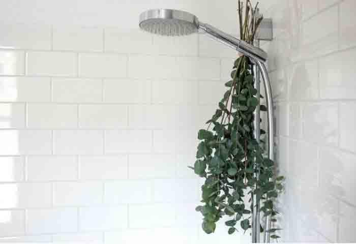 eucalipto en la ducha puede cambiar tu vida