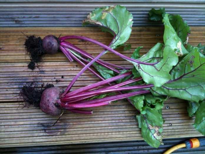 vegetal que ayuda a expulsar todo lo dañino del cuerpo