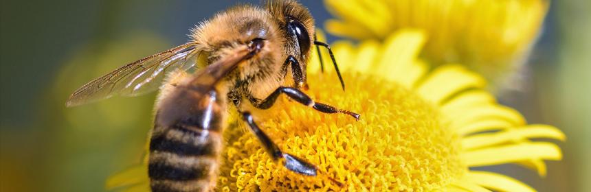 abeja-es-el-animal-mas-importante-del-planeta-2