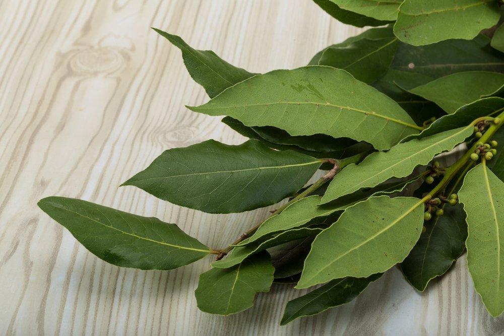 Beneficios del té de hoja de laurel